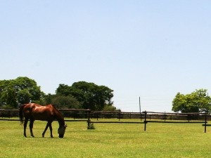 5 Star Care & Facilities Stables & Livery