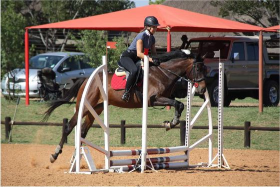 Thoroughbred horse for sale - Valley of Dreams