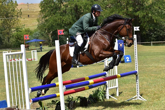 Eventing horse for sale - Lake of Light